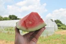 農業未来塾 (6)
